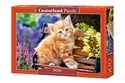 Puzzle Ginger Kitten 500